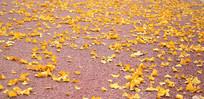 金黄的落叶摄影图