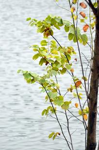 美丽的树叶风景