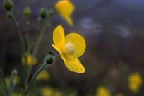 四瓣黄色的小花