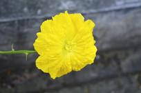 妖娆的黄花