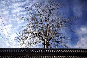 彩云与树上的鸟窝