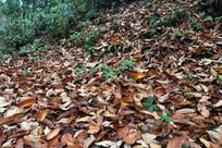 满地枯黄的树叶