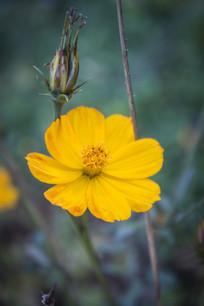 鲜艳的黄色小花