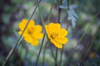 鲜艳的黄色小花朵