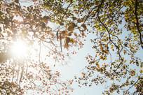 阳光下的秋叶