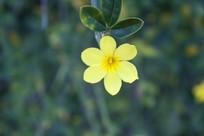 枝头的一朵黄色小花