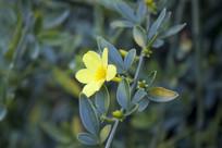 枝头的一朵黄色小花朵
