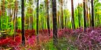 电脑画《杜鹃森林》
