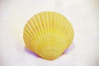 海洋贝类柠檬黄扇贝