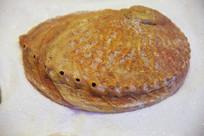 海洋贝类纽西兰鲍螺