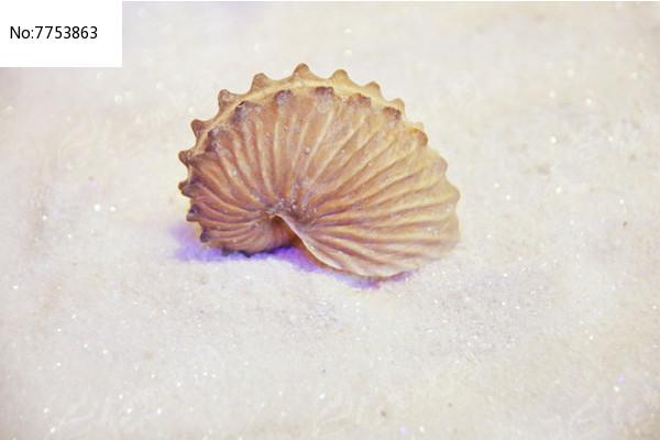 原创摄影图 动物植物 水中动物 海洋贝类幼阔船艄  请您分享: 红动网