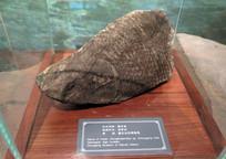 三峡博物馆展品重庆鱼化石