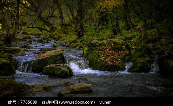 树林中的小河图片