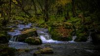 树林中的小河