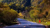 通向树林的公路