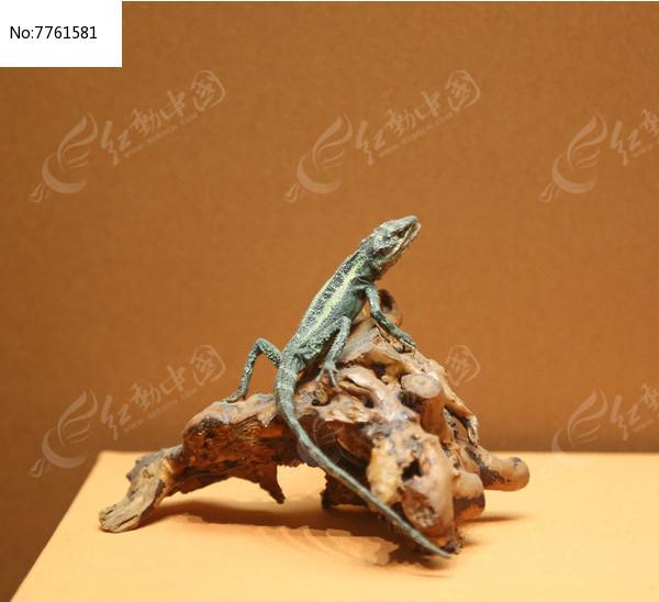 丽文攀蜥标本图片,高清大图_动物植物素材