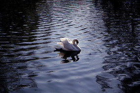 北京动物园水禽湖