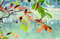 树叶风景图片