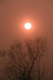 太阳与树木