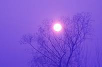 夕阳与树木