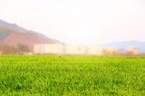 绿色草地微距素材