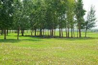 野花绿树林风景