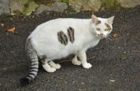 一只白色的猫