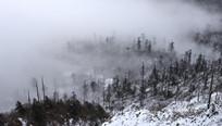 云雾中的林海雪原