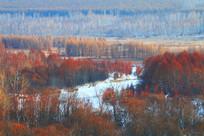 冰雪红树林