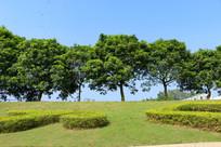 蓝天下的树木