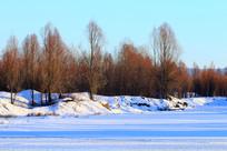 雪野树林风景