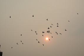 太阳与鸽子