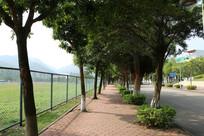 校园林荫小道