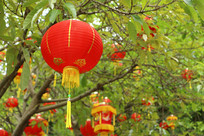树上大红灯笼