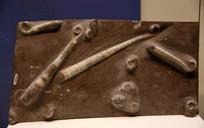 中奥陶世喇叭角石化石