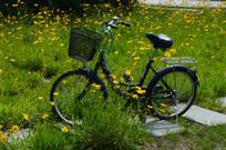 花草与自行车