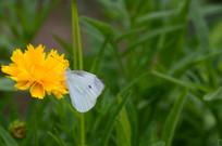 花朵上的蝴蝶