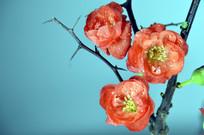 近拍盆载盆景梅花图片