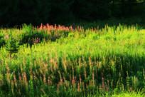 林间草甸野花