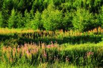 林间草甸植被