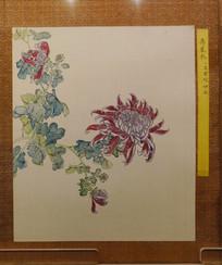 清代佚名《菊花谱图》册之寿星衣
