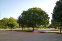 美国俄克拉荷马大学戴维伯尔公园