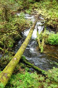 山溪倒木风景