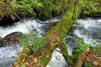 树林丰沛的小溪