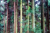 张家界森林风景