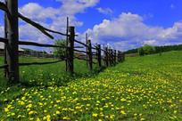 林区的木栅栏