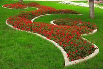 美丽的草坪鲜花