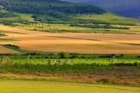秋季草原田野牧歌