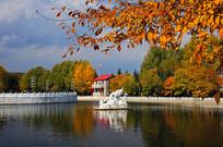 秋季公园湖泊景观
