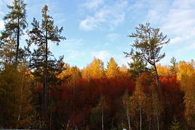 秋季五彩森林风光